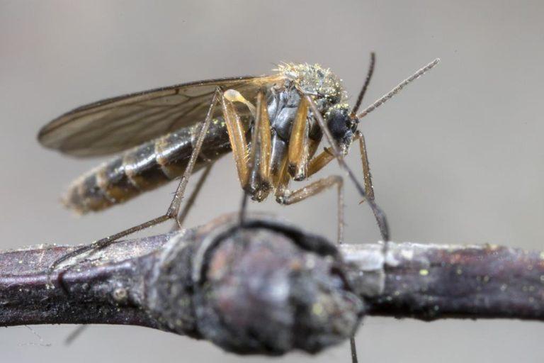 Komary – zmora każdego wieczornego spotkania wśród znajomych.
